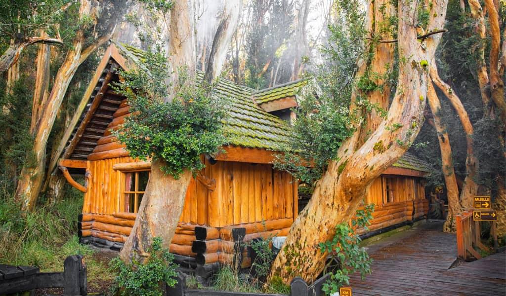 Bosque de arrayanes en Bariloche