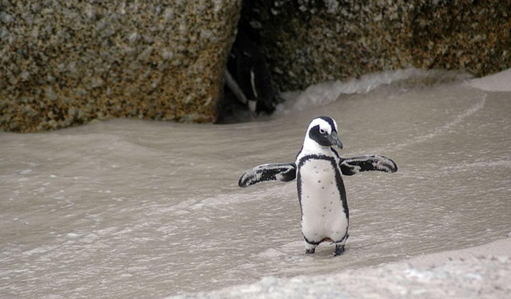 Pingüinos de argentina